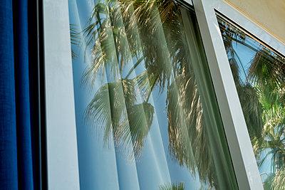 Palmen im Fenster - p1146m1108598 von Stephanie Uhlenbrock