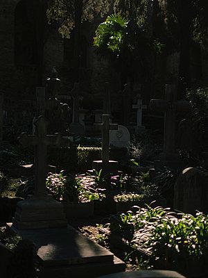Crosses in a graveyard, Cimitero Acattolico di Roma - p1600m2175100 by Ole Spata