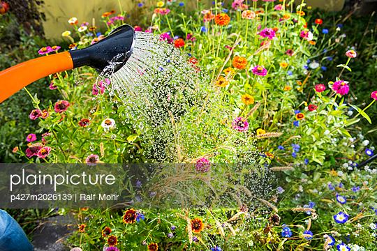 Blumen Gießen - p427m2026139 von R. Mohr