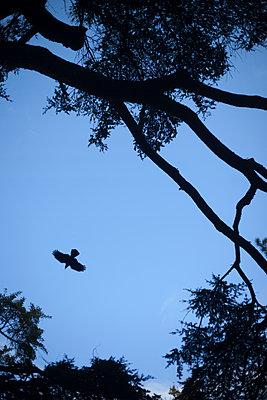 Crow - p1028m1496891 by Jean Marmeisse