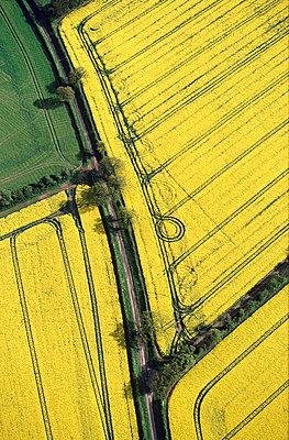 Rape fields in spring - p1048m992607 by Mark Wagner