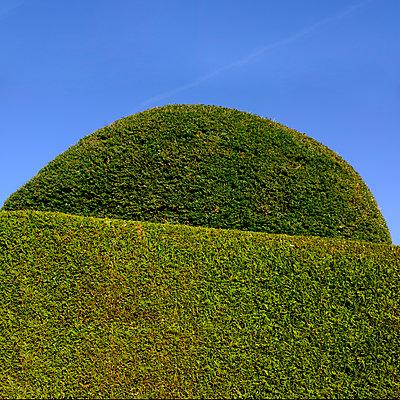 Topiary hedge - p676m1525945 by Rupert Warren