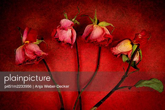 p451m2233956 by Anja Weber-Decker