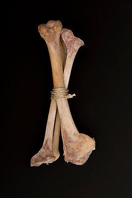 Bündel Knochen - p451m758280 von Anja Weber-Decker