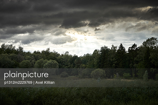 Germany, Forest during thunderstorm and dark clouds in summer - p1312m2229769 by Axel Killian