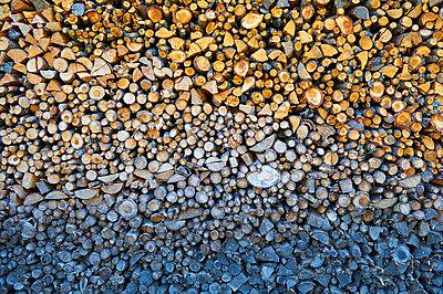 Wood - p851m955140 by Lohfink