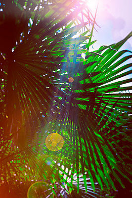 Palm trees in backlight - p1149m1573858 by Yvonne Röder