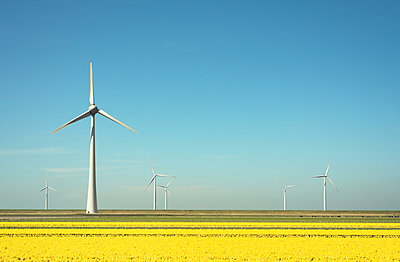 Wind turbines in field landscape of yellow flowers - p429m1469353 by Mischa Keijser