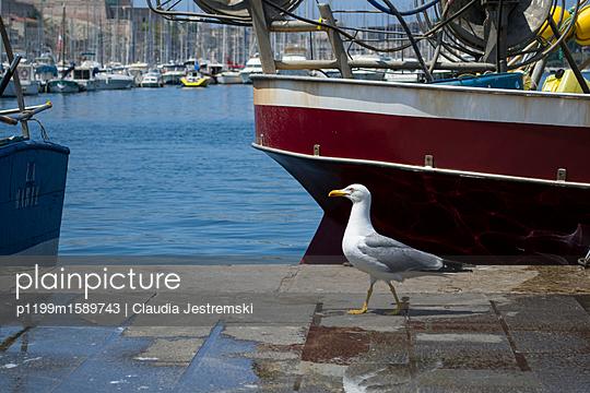 Möwe am Hafen - p1199m1589743 von Claudia Jestremski