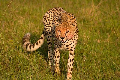 Masai Mara Nationalpark - p5330139 von Böhm Monika