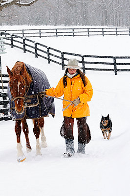 A woman walks a horse through the snow, as dogs follow. - p1424m1501456 by Beck Photography