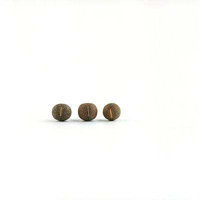Drei Samen - p6060142 von Iris Friedrich