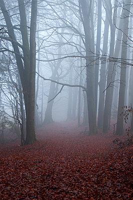 Forest in November - p992m945771 by Carmen Spitznagel