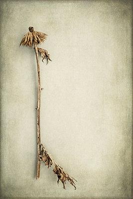 Dead plants - p1228m1425448 by Benjamin Harte