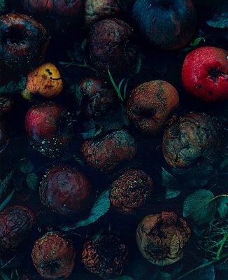 Verschimmelte Äpfel - p7430052 von Stefan Freund