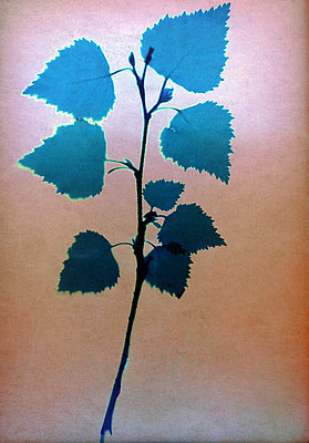 Dried leaves - p945m2279003 by aurelia frey