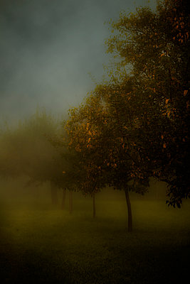 Bäume im Herbstnebel - p647m1113092 von Tine Butter