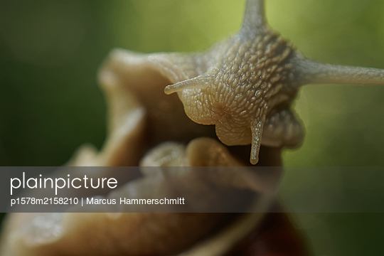Schnecke - p1578m2158210 von Marcus Hammerschmitt