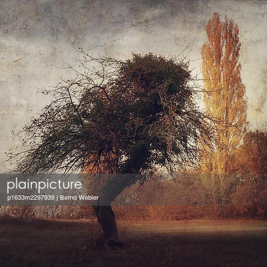 The Appletree - p1633m2297939 by Bernd Webler
