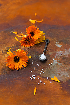 Blossoms of Pot Marigold, spoon and globules on rusty ground - p300m1470126 by Mandy Reschke