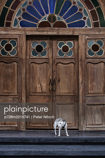 Thailand, Bangkok, Jack Russell in front of an antique front door - p728m2219741 by Peter Nitsch