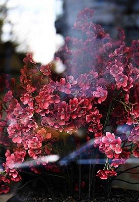 Kunstblumen - p1229m2231107 von noa-mar