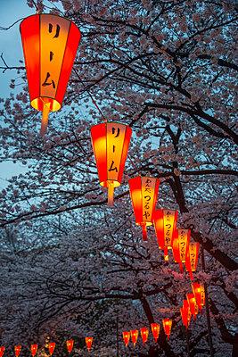 Japan, Tokyo, Ueno, Ueno Park, row of lampions illuminating cherry blossom at dusk - p300m2104237 by Michael Runkel