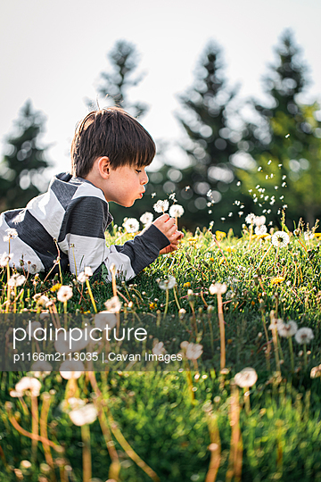 Young boy laying on the grass blowing seeds off of a dandelion flower. - p1166m2113035 by Cavan Images