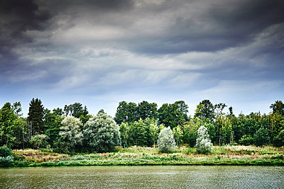 Germany, Grove by the river - p1312m2229767 by Axel Killian