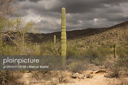 Saguaro National Park - p1291m1116139 by Marcus Bastel