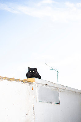 black cat lying on a whitewashed wall and empty sign - p1656m2245197 by Javier Martinez Bravo