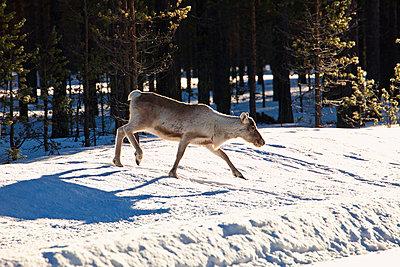 Snowbanks - p235m1144504 by KuS
