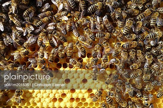 Bienen auf Brutwabe - p061m2015351 von Christoph Ebener