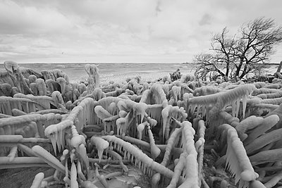 Trees Encased In Ice in Lake Erie Winter Storm - p1166m2261565 by Cavan Images