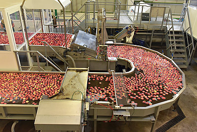 Conveyor belt with apples in water - p300m2144399 by lyzs