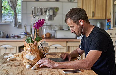 Man working from home, sitting at kitchen table with cat, using laptop - p300m2155919 by Veam