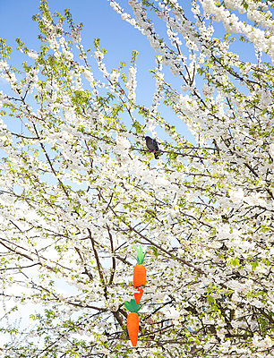 Carrots in tree - p606m938042 by Iris Friedrich