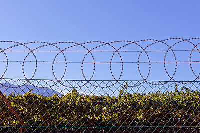 Barbed wire - p978m1020526 by Petra Herbert