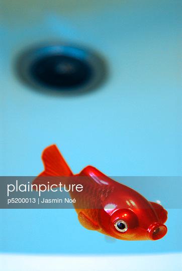 Treibender Fisch im Waschbecken - p5200013 von Jasmin Noé