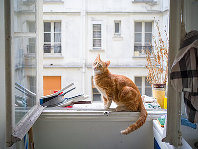 Cat sitting at the open window - p1267m2228246 by Wolf Meier