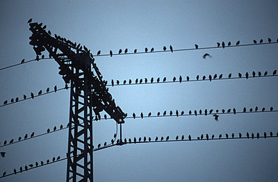 Swallows on a wire - p2680188 by M. Klippel