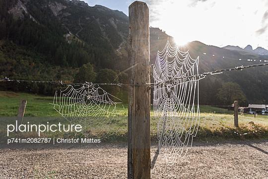 Spinnennetz in Oberstdorf - Rappenseehütte - p741m2082787 von Christof Mattes