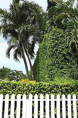 Garden in Key West - p045m854408 by Jasmin Sander