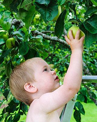 Boy picking apple - p575m839326 by Mikael Svensson