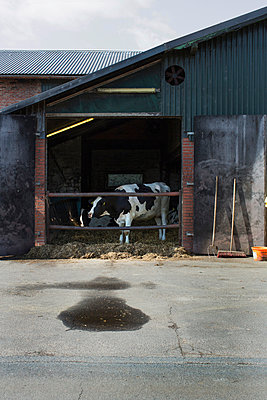 Cowshed - p877m908111 by Julia Wagner