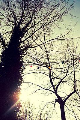 Lichterkette am Himmel - p432m1538728 von mia takahara
