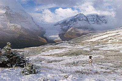 Columbia Icefield, Jasper National Park, Alberta, Canada - p4428359f by Design Pics