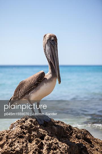 Pelikan - p045m1559070 von Jasmin Sander