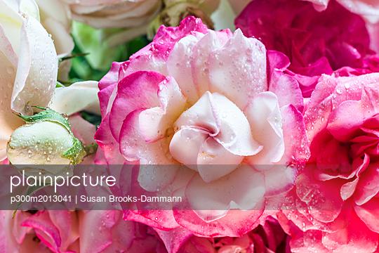 Wet rose blossoms and blossom bud - p300m2013041 von Susan Brooks-Dammann