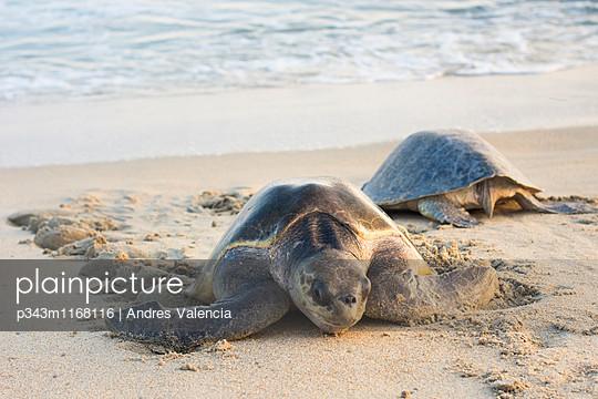 p343m1168116 von Andres Valencia